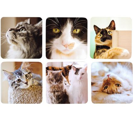 Quality Set of 6 Cat Coasters